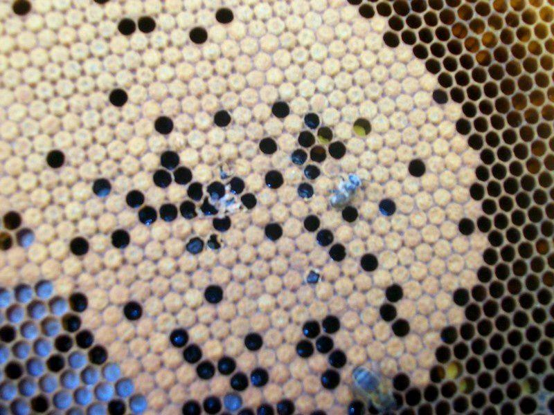 abeilles ruches, nos ruchers de Bourgogne, les apiculteurs Api4 en plein travail, leur évolution au fil des jours