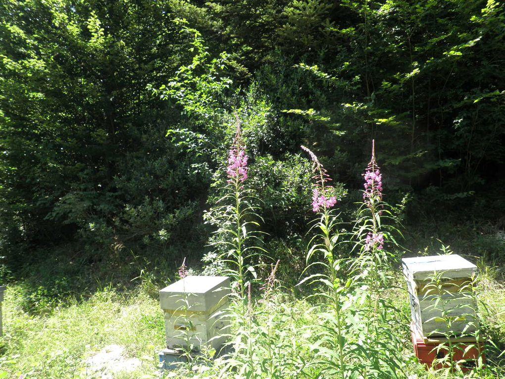 """"""" transhumance"""" aisée avec : le 4x4, remorque découverte, porte ruches Valentin de notre fabrication, nous transhumons dans le Morvan, et le Jura"""