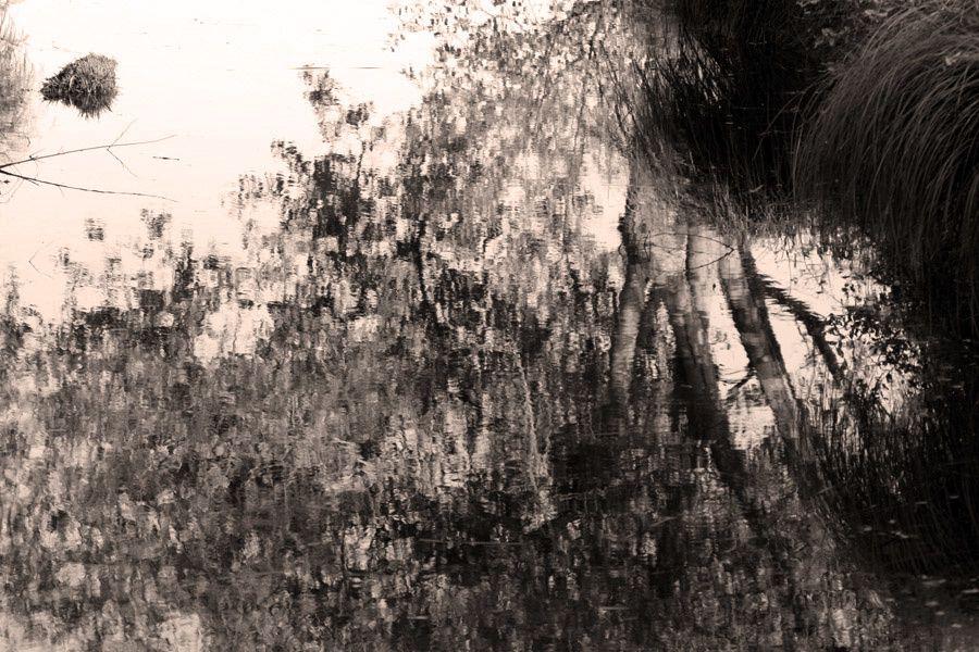 Un automne dans le parc régional naturel de Brière - Photos Thierry Weber Photographe La Baule Guérande
