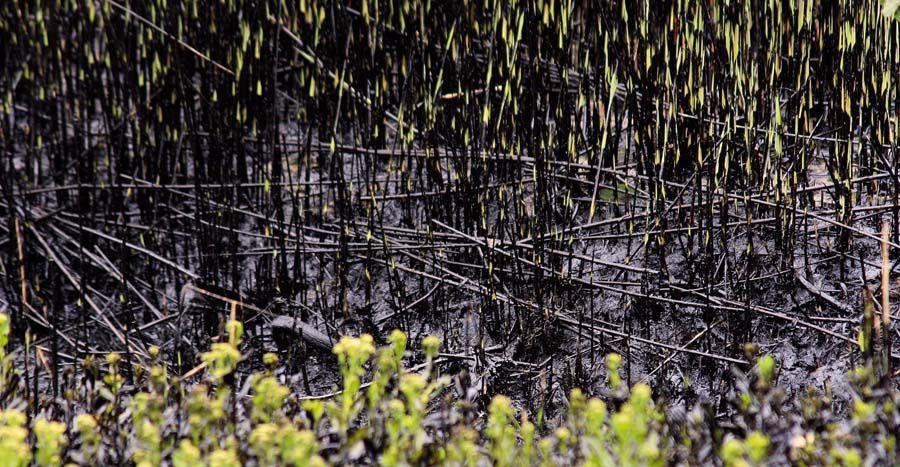 Album photos pollution de l'estuaire de la Loire par la raffinerie Total de Donges - Mars 2008