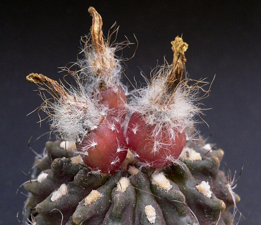 Détails de cactées et autres plantes succulentes.