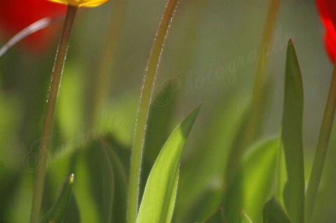<p>Dites le avec des fleurs...</p><p>Fleurs des près, fleurs des champs, fleurs à tout bout de champ.</p><p>Bouquets en pétales d'émotion, voyages à travers les saisons, couleurs d'un temps où les senteurs s'envolent au vent des envies...</