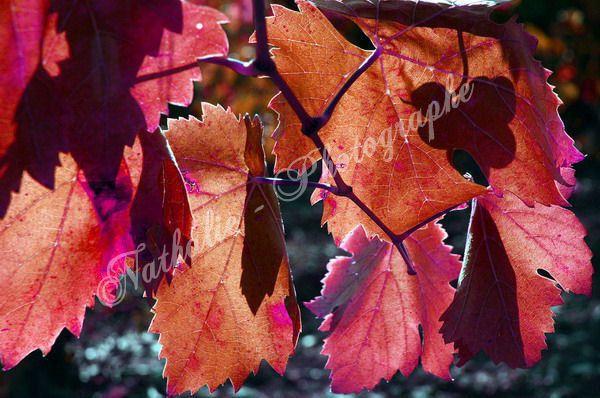 <p>va vigne par monts et marrées, court de tes innombrables rangées, sème palette multicolore, grappes aux mille et unreflets d'or, sonne le vin à chaque matinau creu desquatre saisons, au gré du vent, au grain d'antan...</p><p>à votre