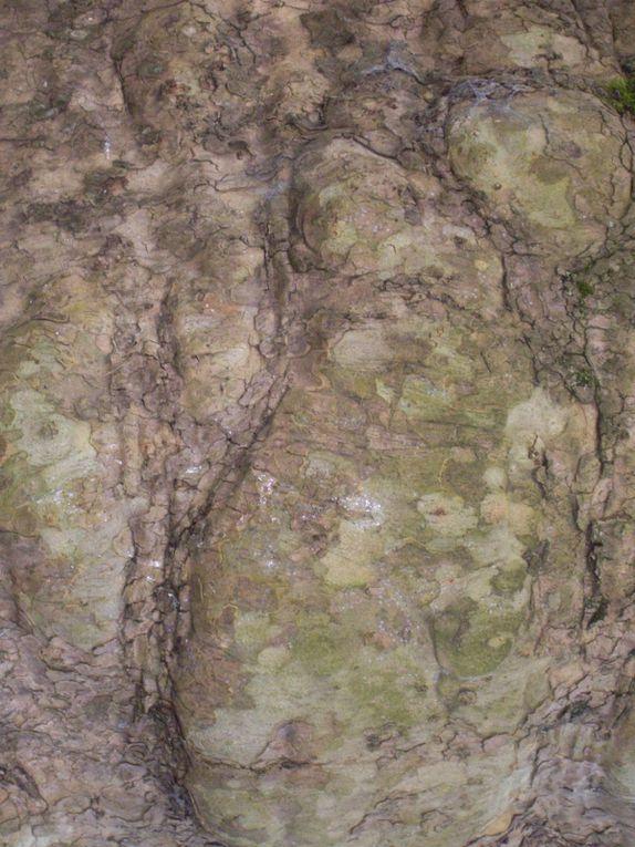 découvrez les écorces des arbres de nos régions.