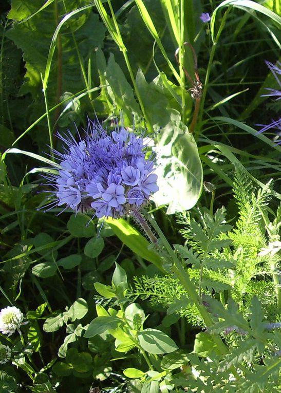 Album - les-fleurs-du-jardin