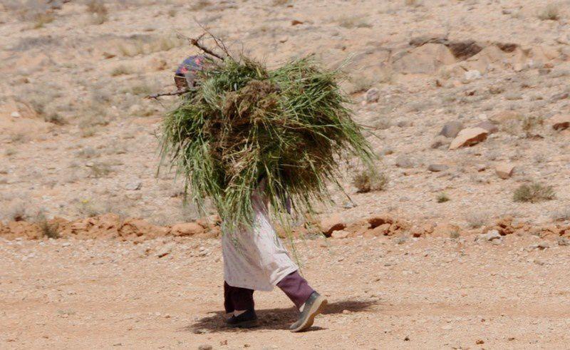 Album - Maroc-2012