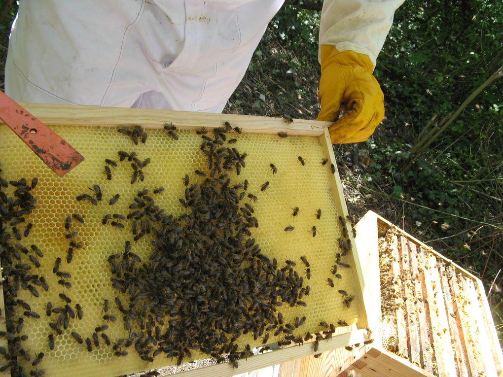 Album - Les ruches