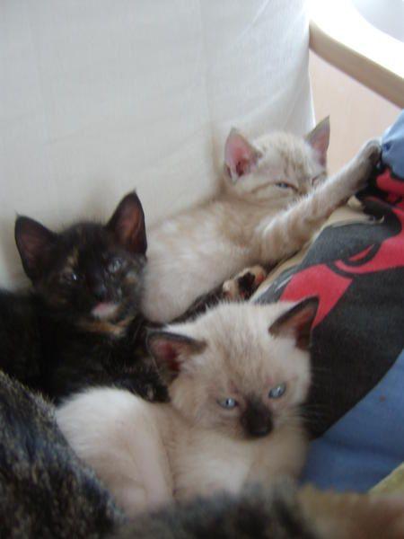 Les chats de la famille.Ceux d'avant et ceux de maintenant.Et des amis