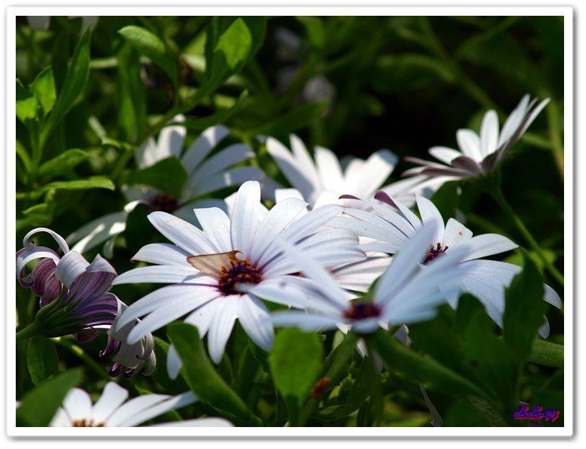 mes photos en macro plaisir les fleurs le monde du tout petit