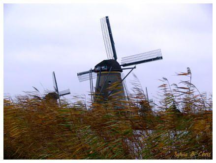 <p>Le 8 décembre 2006 nous sommes allées visiter les Pays-Bas</p><p></p>