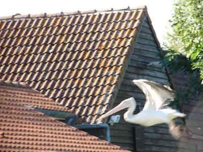 Album - la-maison-de-l-oiseau-baie-de-somme-2009