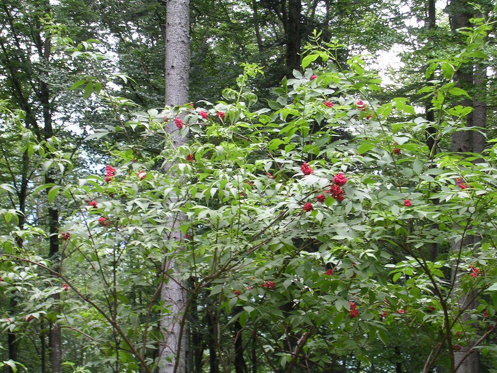 Album - fleurs rouges