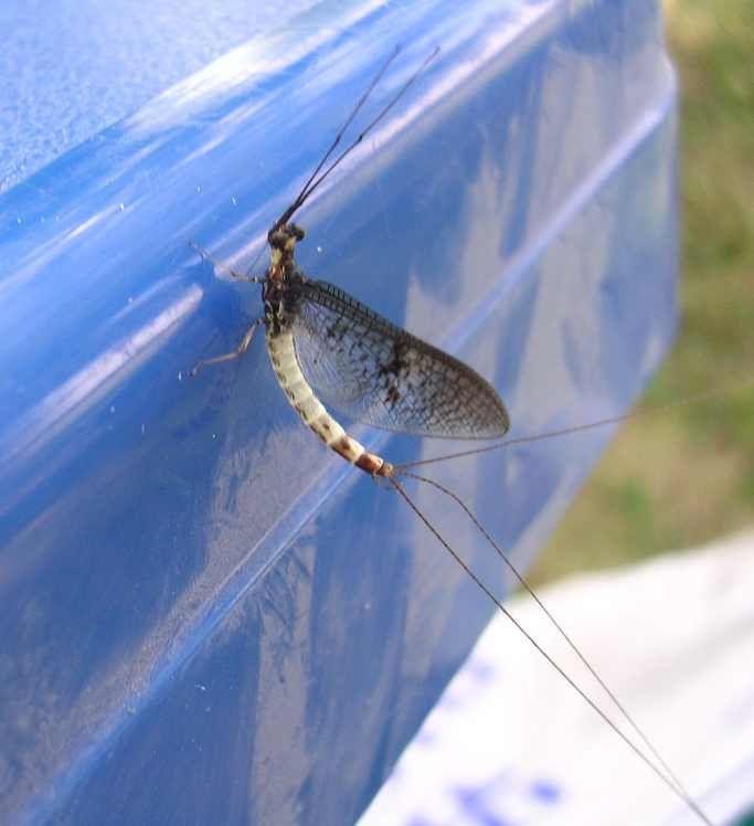 Album - insectes-2
