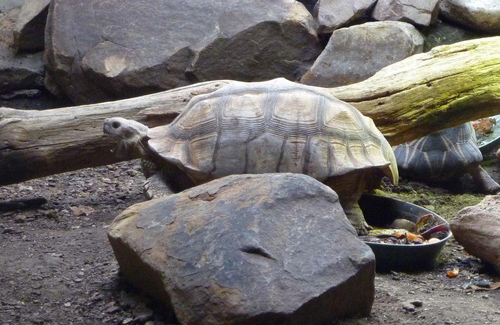 Album - reptiles amphibiens