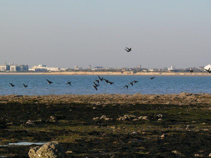 Découvrez ici les affleurements de la presqu'île du Chay à Angoulins sur mer, depuis la pointe de la Belette jusqu'à la pointe de la Barbette.