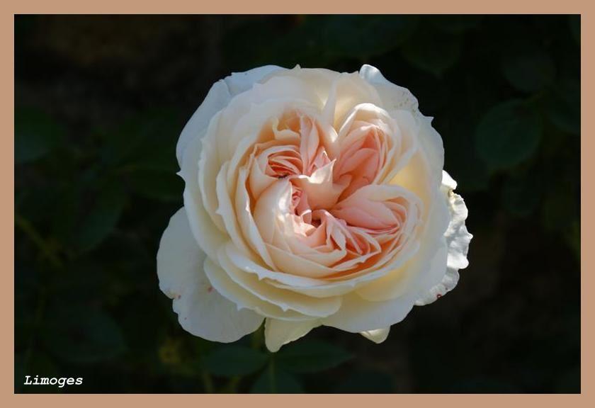 Album - Fleurs-2