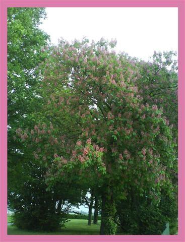 Les fleurs qui décorent mon blog.