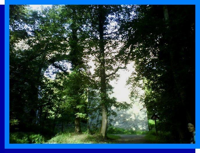 Album - Versailles-Buc