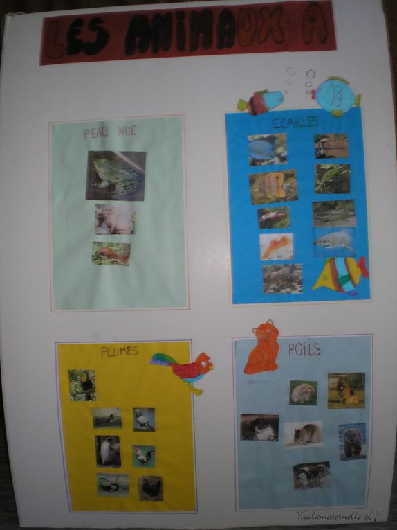 Album - Photos-maternelle-5