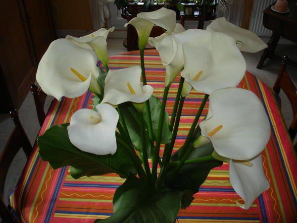 fleurs coup de coeur