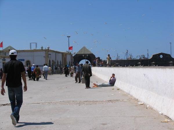 quelques 106 photos d'Essaouira, de son port, de ses mouettes et de ses chats plus ou moins mités