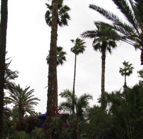 Le Jardin Majorelle et ses merveilleuses couleurs (même sous la pluie)
