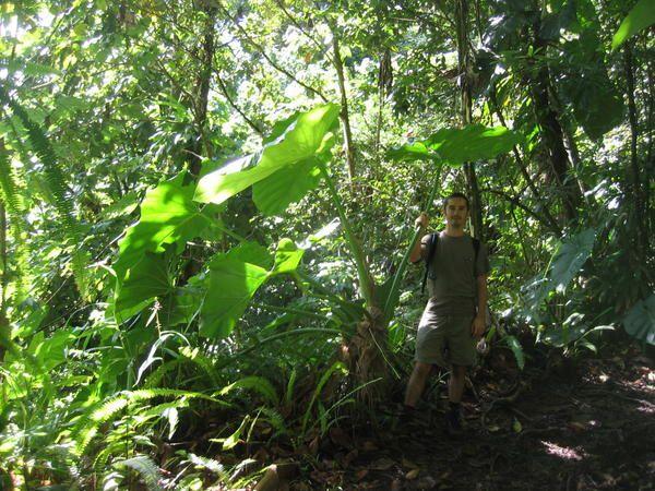 Album - Deshaies - Basse-Terre