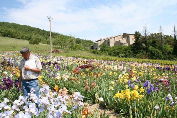 <p>Se promener au milieu des iris chez Bernard Laporte , c'est comme se promener au milieu du paradis ! </p><p>Gentillesse , simplicité et connaissances au programme si vous lui rendez visite , que demander de plus ?</p>