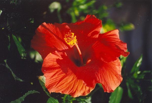 Des fleurs, pour le plaisir de l'oeil
