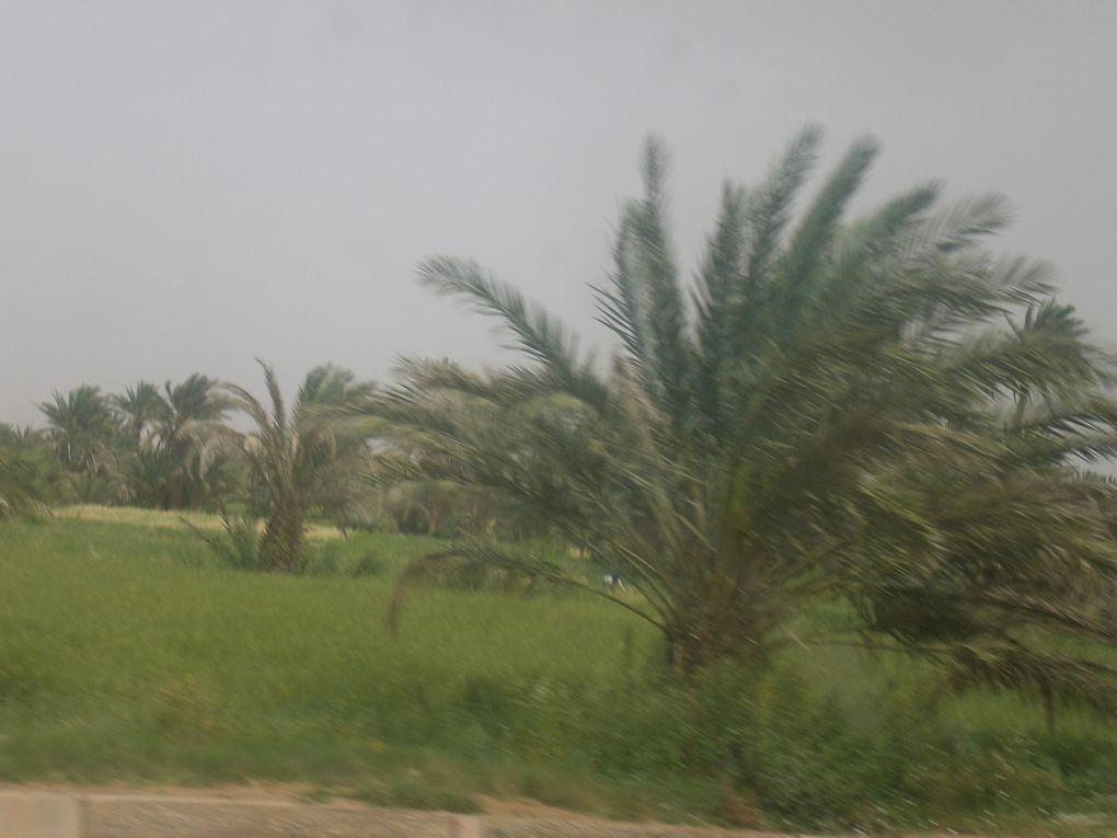 divers photos de la nature surtout du Sahara région sud-est Marocain prises par l'auteur de ce blog