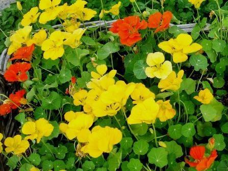 J'aime les fleurs.Ce sont les fleurs pres de chez moi, au Japon.