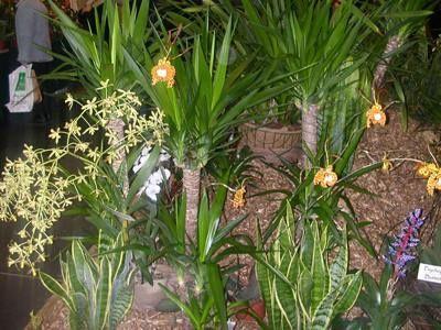 Photo de l'exposition d'orchidée de Bourg la Reine en mars 2010