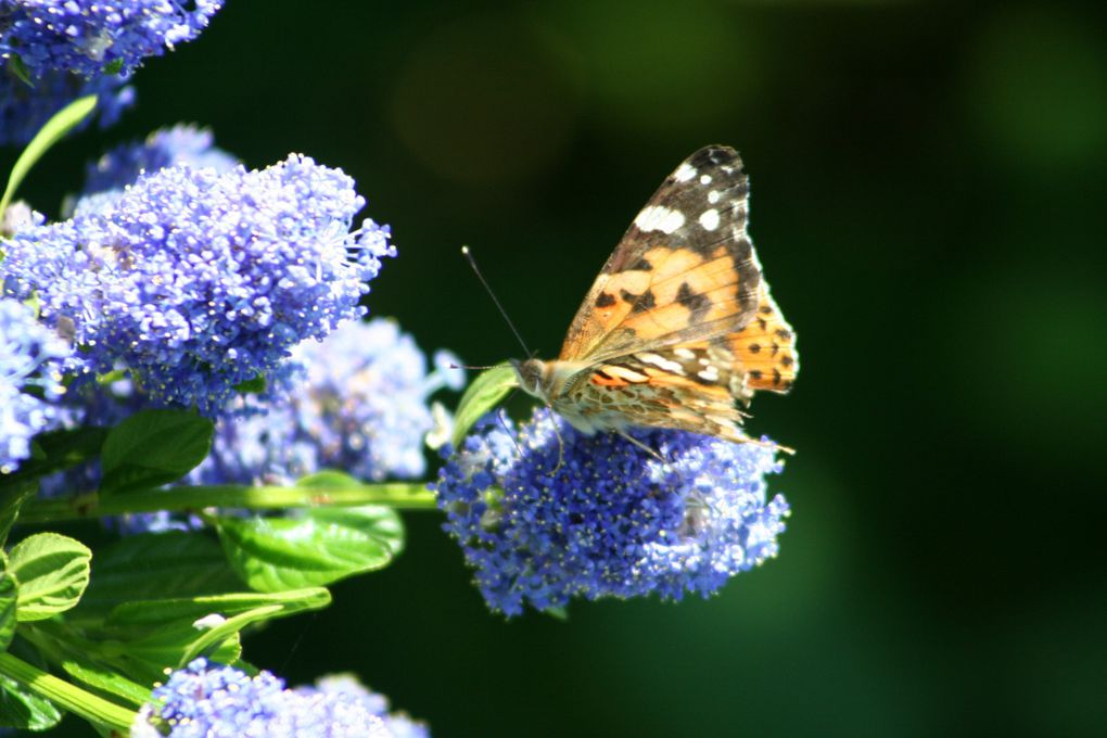 Photos de l'Ile de Sein , de mon jardin, d'une journée aux Sept Iles, ...