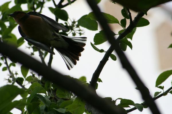 La suite de mes photos sur la faune   ...et mes débuts avec mon nouvel appareil : L'EOS 350D de Canon NB: Mes photos ne sont pas libres de droit.