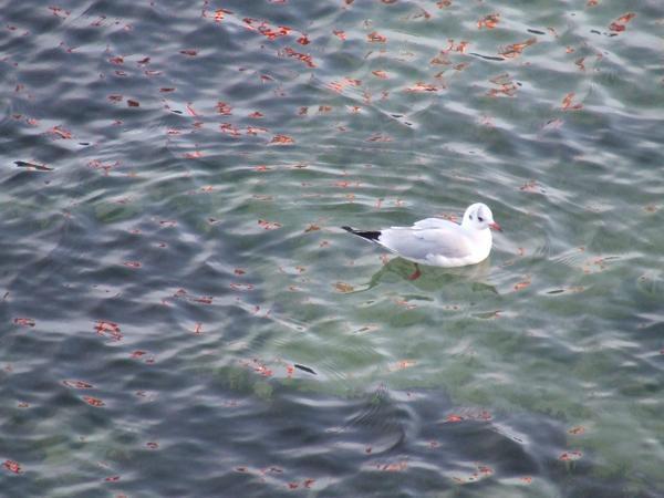 <p><strong>Quelques aperçus de la faune en Bretagne</strong>,</p><p>Anémones et étoiles de mer, patelles (bernics en breton), huitres,...</p><p>Chevaliers, barges (si,si) à bec rouge, mouettes rieuses ou pas...</p>La suite, logique et chron