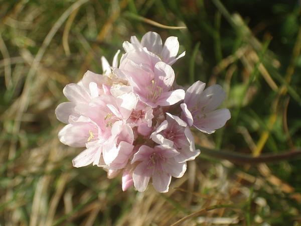 <p><strong>Voici quelques photos sur la flore que j'ai pu photographier en Bretagne...</strong></p><p>Cet album est mis &agrave&#x3B; jour r&eacute&#x3B;guli&egrave&#x3B;rement alors n'h&eacute&#x3B;sitez plus &agrave&#x3B; revenir...</p><p>&nbsp&#x3B;Les noms des plantes ou des fleurs ne sont pas toujours faciles &agrave&#x3B; trouver. Alors, si vous les connaissez, ou si vous avez des liens interessants sur la question, n'h&eacute&#x3B;sitez pas &agrave&#x3B; me laisser un commentaire. Je n'ai d'ailleurs pas h&eacute&#x3B;sit&eacute&#x3B; &agr
