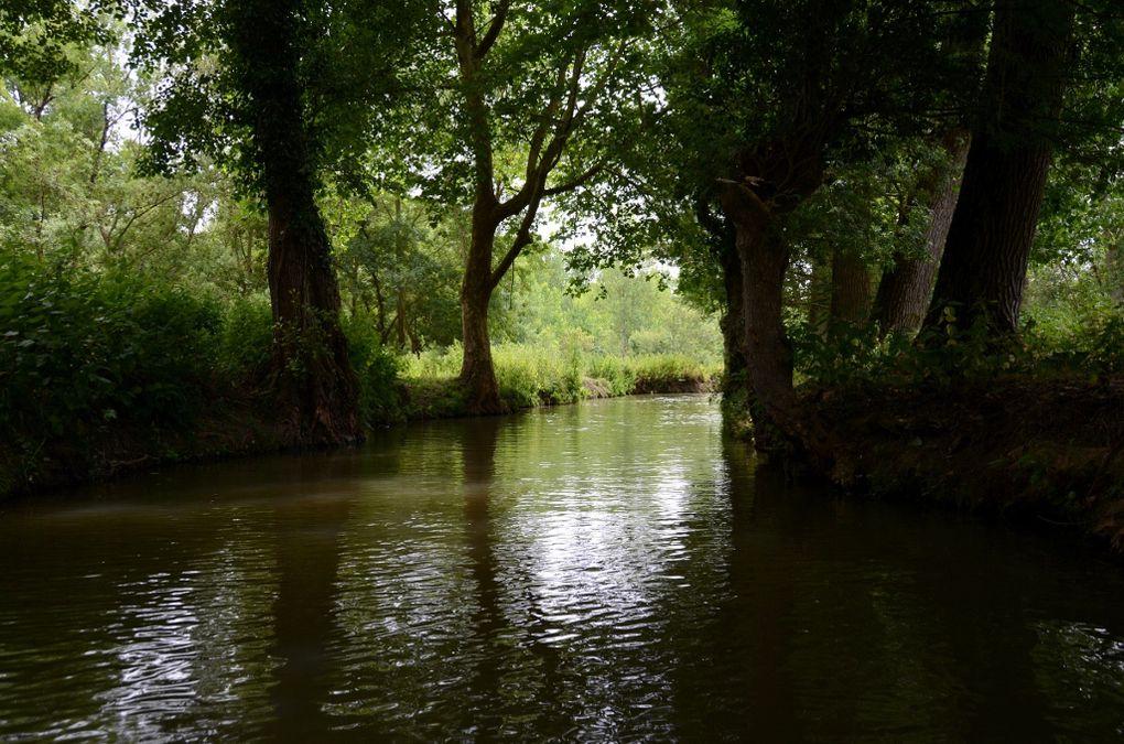 Le Marais poitevin est la deuxième plus grande zone humide de France (après la Camargue), avec une superficie de 100 000 hectares environ. A l'échelle de l'Europe, il représente le tiers des 300 000 hectares des marais littoraux atlantiques.