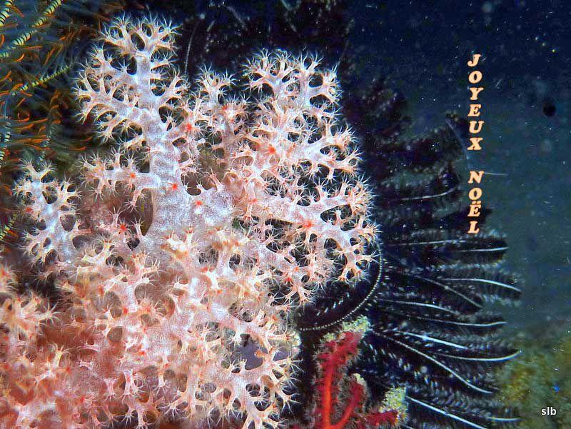 Album - Amis-et-merveilles