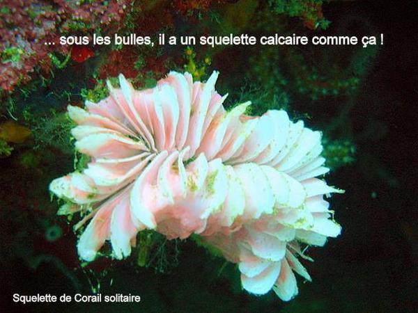 Album - Jardin sous-marin (6)