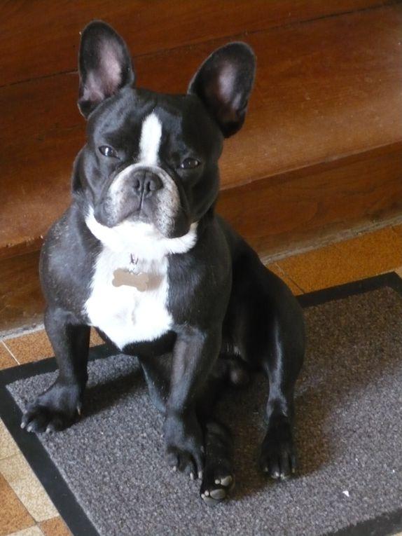 les aventures de Gribouille, le chien, et de Kiwi (la minette)