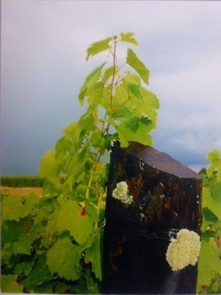 Vins de Loire, avec des photos dans les vignes, au chai, dans des salons...Cl. Elisabeth Poulain
