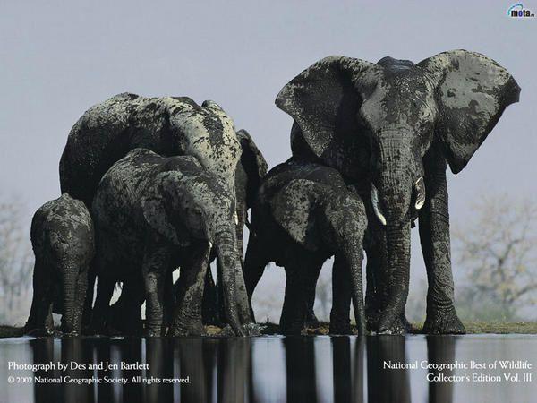 Album - Paysages et animaux
