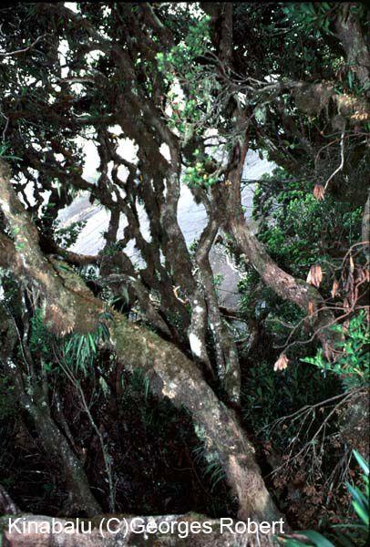 Quelques photos de mes ascensions du Kinabalu - province du Sabah - Bornéo - Malaisie... Une belle balade qui devient de plus en plus touristique