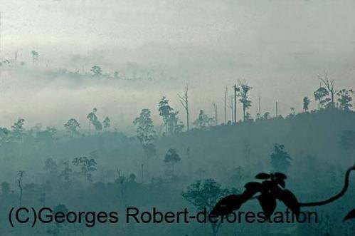 Une série d'image du véritable massacre écologique qui est en cours à Bornéo. Exploitation des bois précieux, du charbon de bois, plantation de palmiers à huile... Un sacré cocktail...!