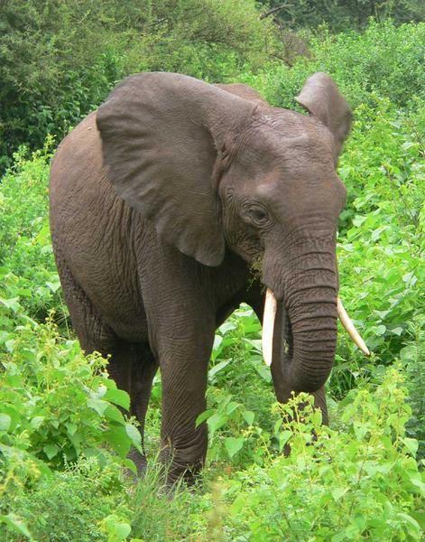 """<p><strong><span style=""""FONT-SIZE: 9pt&#x3B; FONT-FAMILY: Arial"""">2 jours de safari au Ngorongoro et au Lac Manyara : la nature sauvage, tout simplement magique !!</span></strong><span style=""""FONT-SIZE: 9pt&#x3B; FONT-FAMILY: Arial""""><p></p></span></p><p"""