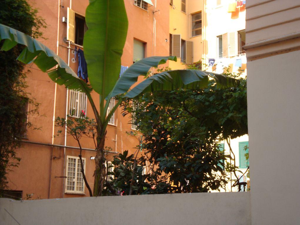 Album - GUERRILLA GARDENING a Roma, in Nello s way