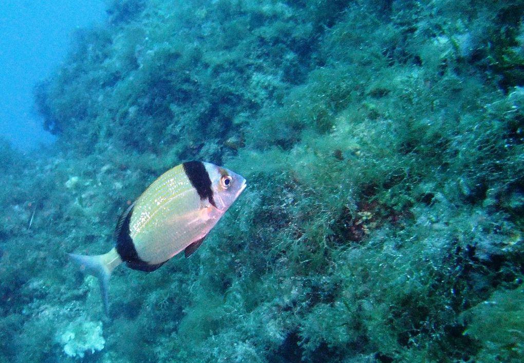 Week End à Port Cros...Superbes plongées...
