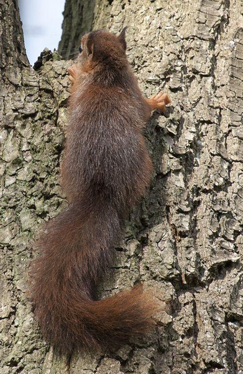 Album - écureuils