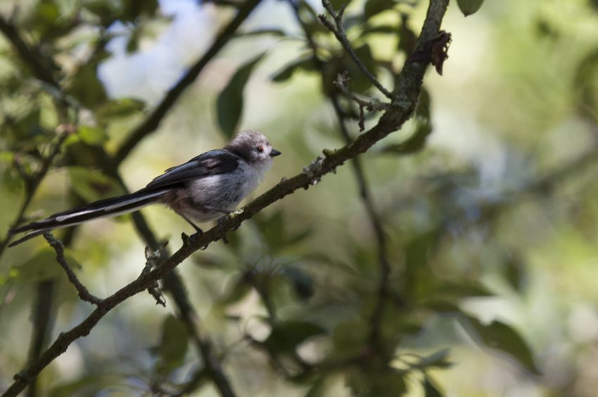 Album - oiseaux en été
