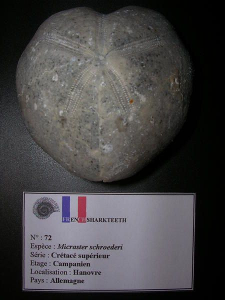 - Sainte Marie aux Mines 2007- Musée Helbronner 2007- Bourse de Nancy 2008- Bourse de Saverne 2008- Sainte Marie aux Mines 2008